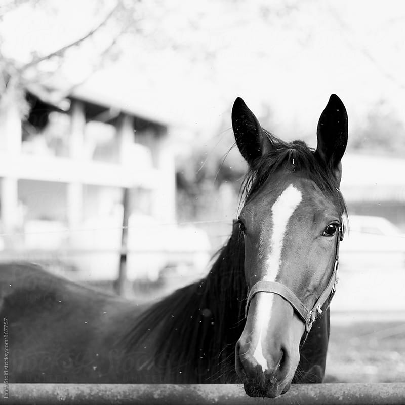 Close up of horse behind fence in black and white in the sun by Laura Stolfi for Stocksy United