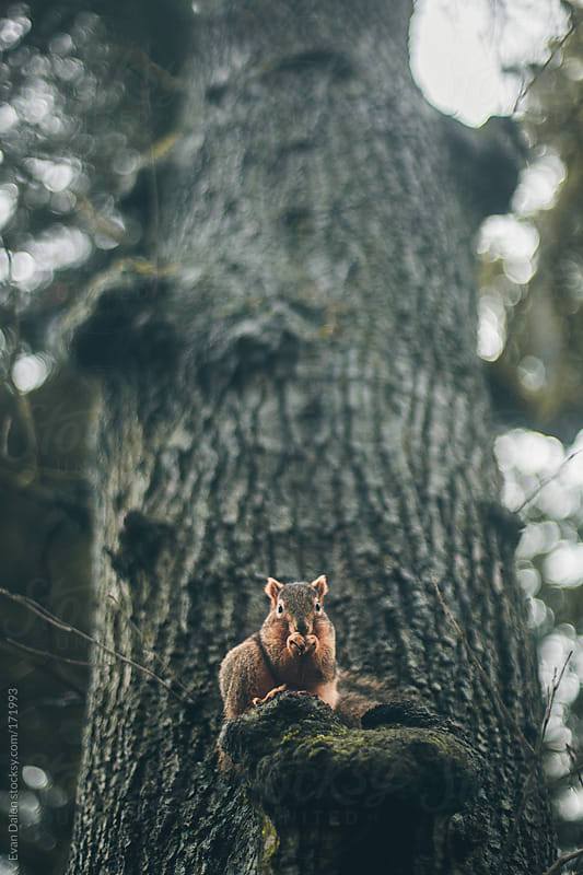 Squirrel by Evan Dalen for Stocksy United