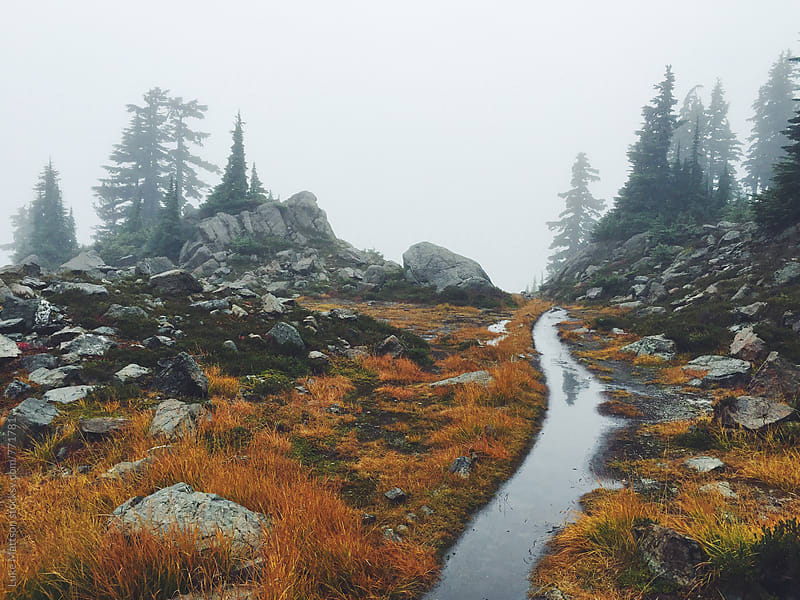 Flooded Forest Path Winding Through Foggy Forest Mountainside by Luke Mattson for Stocksy United