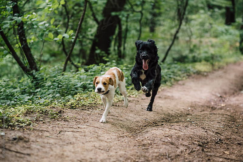 Dogs having fun in the forest  by Boris Jovanovic for Stocksy United