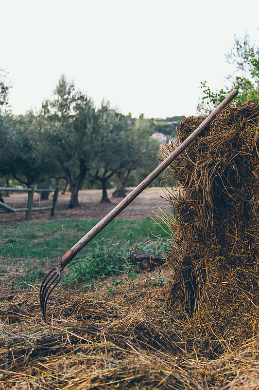 Pitchfork in the Hay by Tommaso Tuzj for Stocksy United