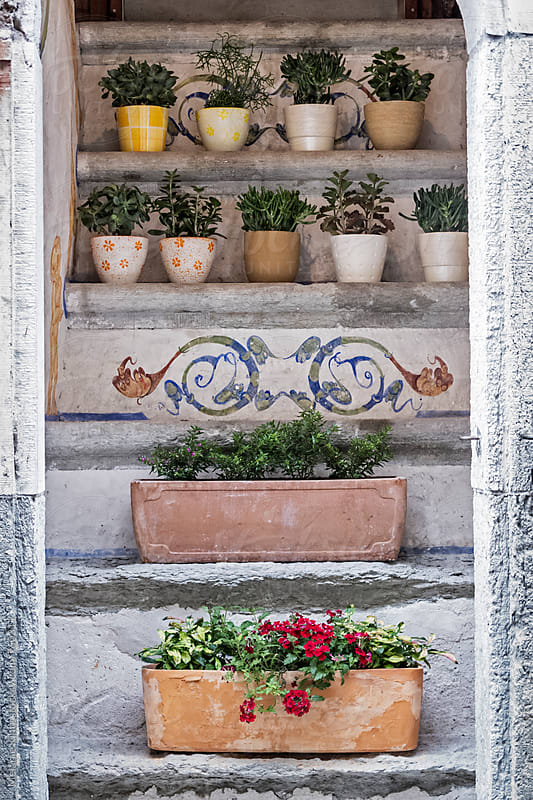 Succulents in pots on stairs by Melanie Kintz for Stocksy United