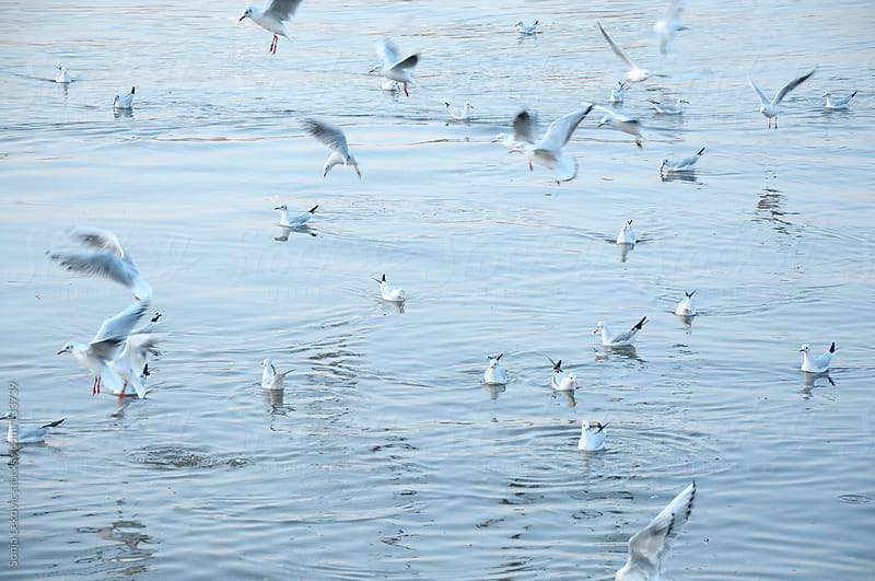 seagulls above water by Sonja Lekovic for Stocksy United