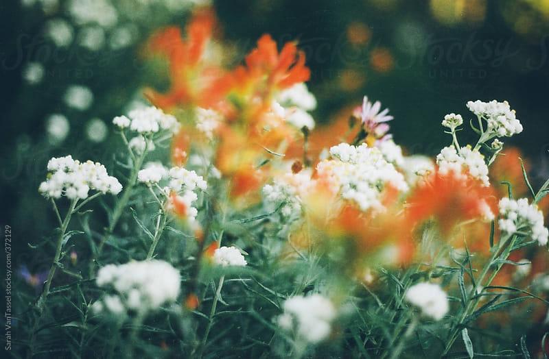 Wild Flowers on Rainier by Sarah VanTassel for Stocksy United