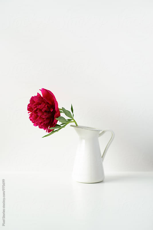 Single peony flower in a pitcher on white by Pixel Stories for Stocksy United