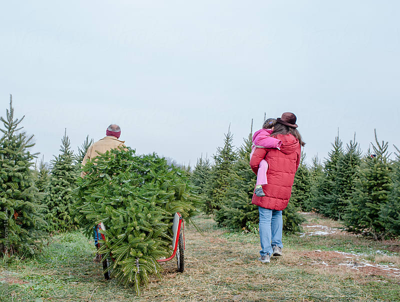 Christmas Tree Hunting: Three Generations Complete the Hunt by Brian McEntire for Stocksy United