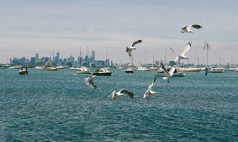 Flock of Seagulls, Williamstown, Melbourne, Australia by Gary Radler Photography for Stocksy United