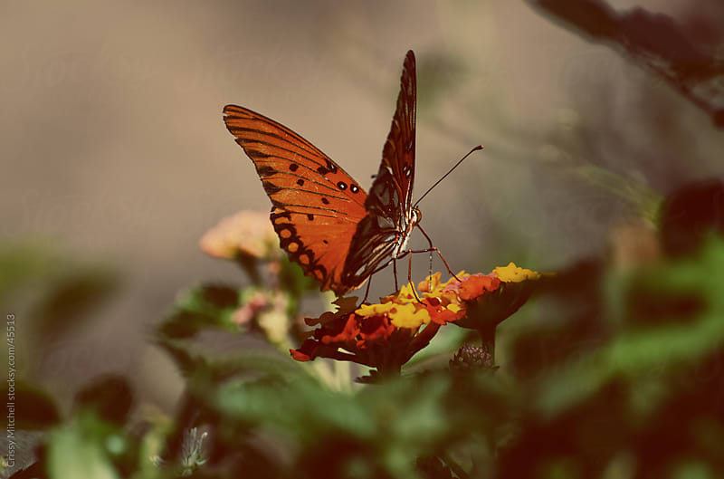 Butterfly  by Crissy Mitchell for Stocksy United
