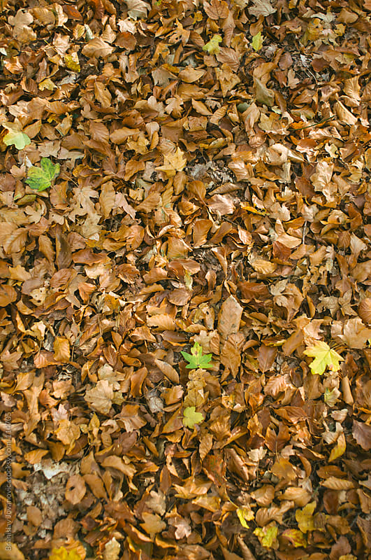 Leaves on the Ground in Autumn by Branislav Jovanovic for Stocksy United