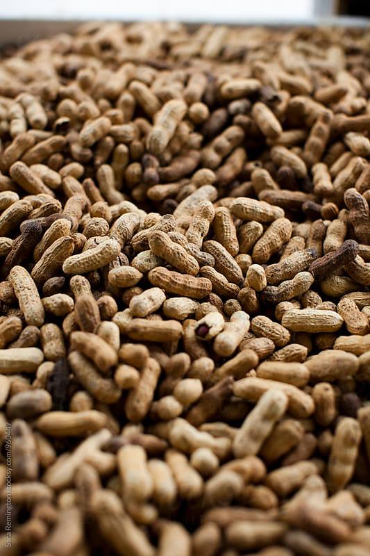 Peanuts by Sara Remington for Stocksy United