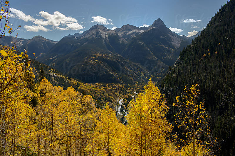 Golden aspens and mountains in autumn by Mick Follari for Stocksy United