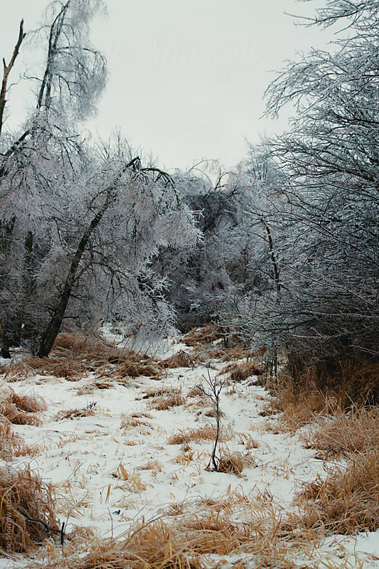 Michigan Winter by Jesse Morrow for Stocksy United