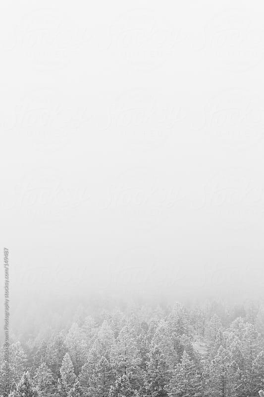 Snow covered forest by Jeremy and Alicia Brown Photography for Stocksy United