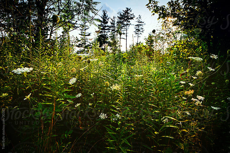 A close landscape of nature and flowering green plants in the pine forest in the summer by Tom Eells for Stocksy United