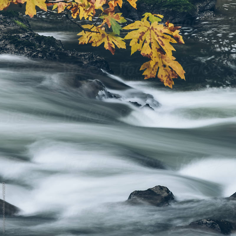 Stream Flowing Throug  Rocks by unite images for Stocksy United