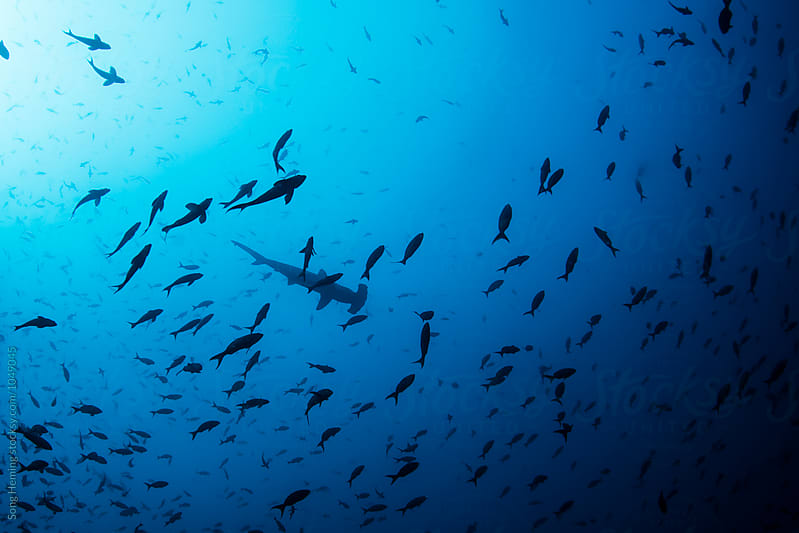 A hammerhead shark on the top by Song Heming for Stocksy United