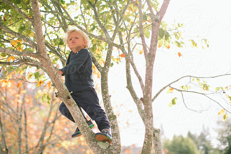 Grumpy Little Boy in a Tree by Bryan Rupp for Stocksy United
