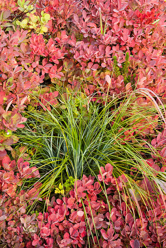 Autumn vegetation, closeup by Mark Windom for Stocksy United