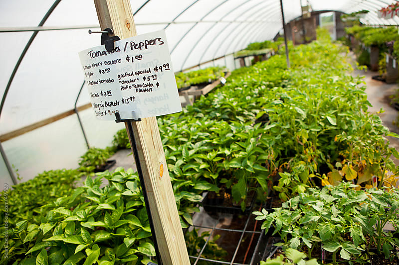 Nursery: Prices for Vegetable Annual Plants by Sean Locke for Stocksy United