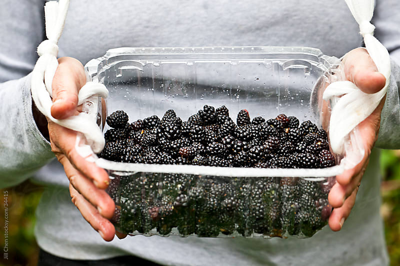 Wild Blackberry Picking by Jill Chen for Stocksy United