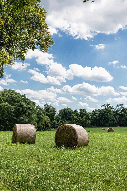 farmland - digital file by Andrew Cebulka for Stocksy United