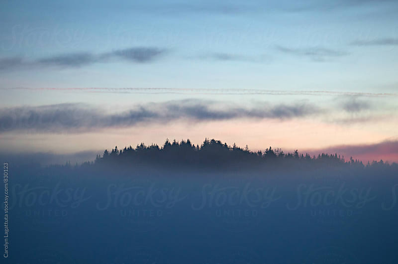 Island of treetops surrounded by fog by Carolyn Lagattuta for Stocksy United