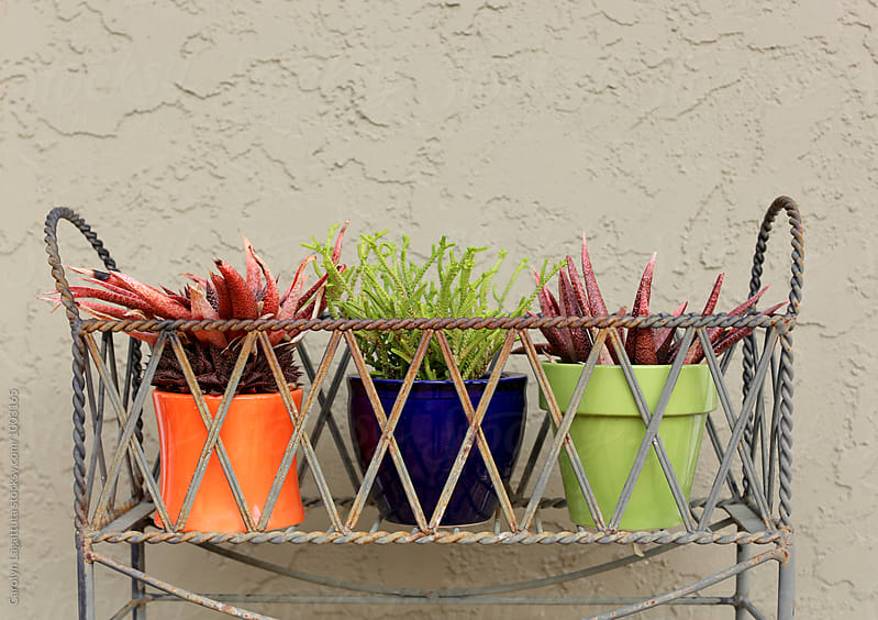 Succulents in a decorative metal holder by Carolyn Lagattuta for Stocksy United