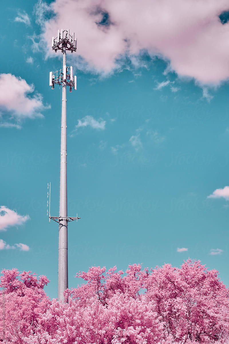 Infrared Cell Tower Among Pink Fluffy Trees Stocksy United
