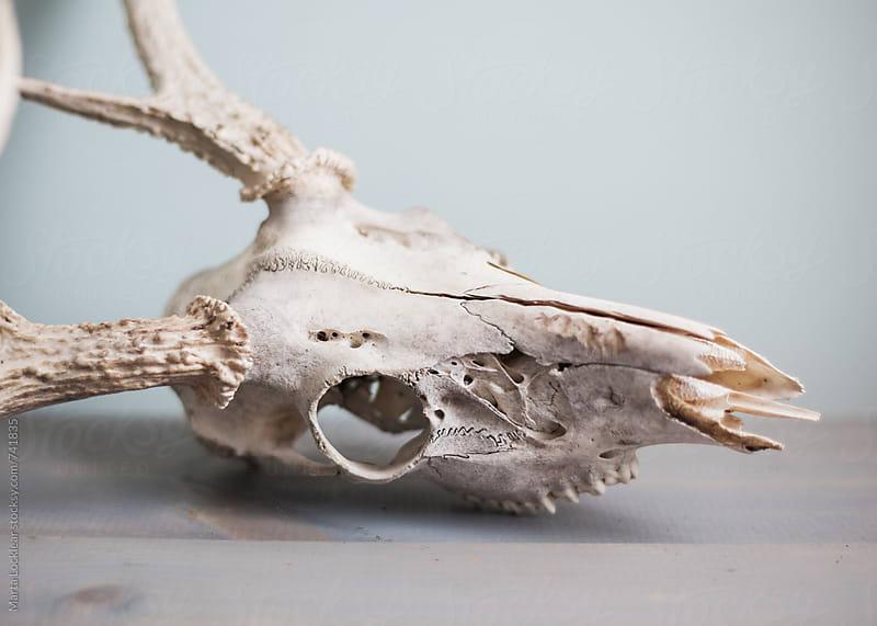 Deer Skull Decor by Marta Locklear for Stocksy United
