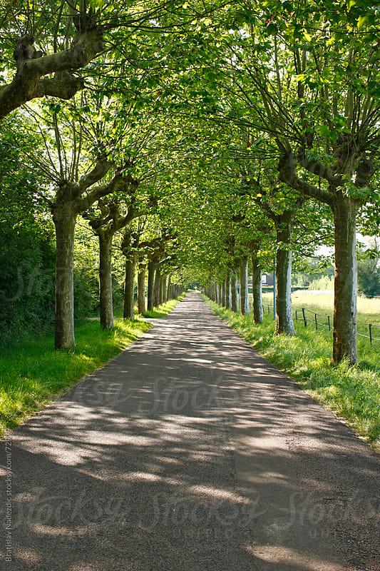 Tree alley in France by Bratislav Nadezdic for Stocksy United
