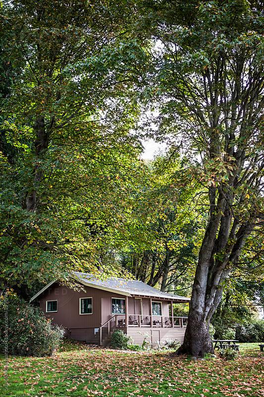 Cabin in the woods by Suprijono Suharjoto for Stocksy United