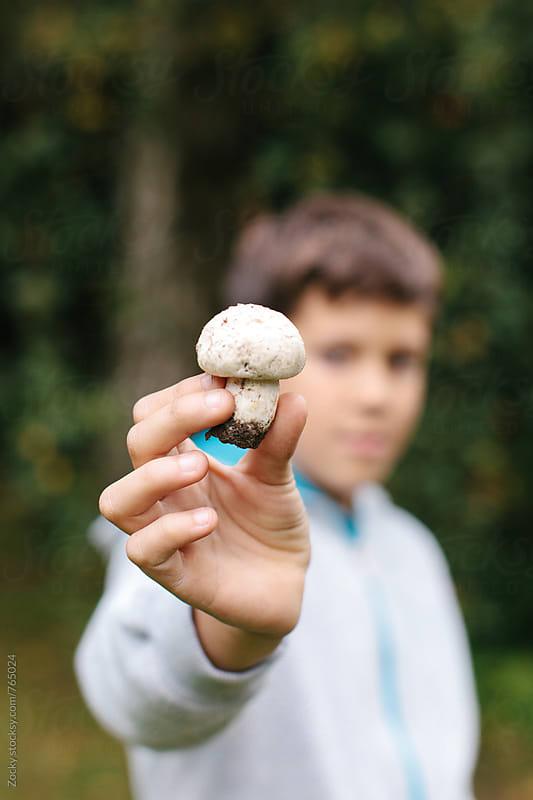 Fresh mushroom by Zocky for Stocksy United