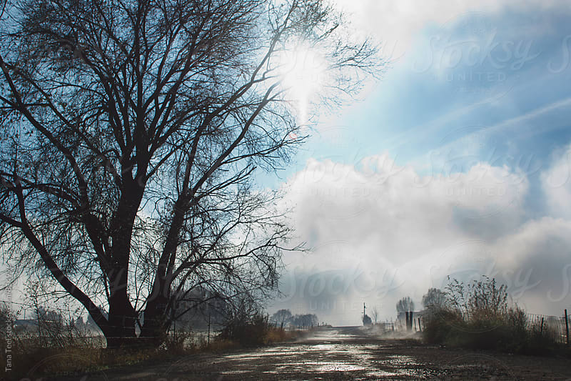 rural road as fog lifts  by Tana Teel for Stocksy United
