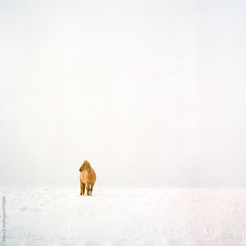 Brown horse stands in snow covered field with overcast skies. by Riley Joseph for Stocksy United