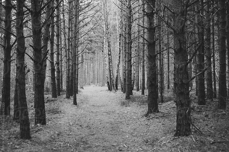A path in to dark forest by Jonas Räfling for Stocksy United