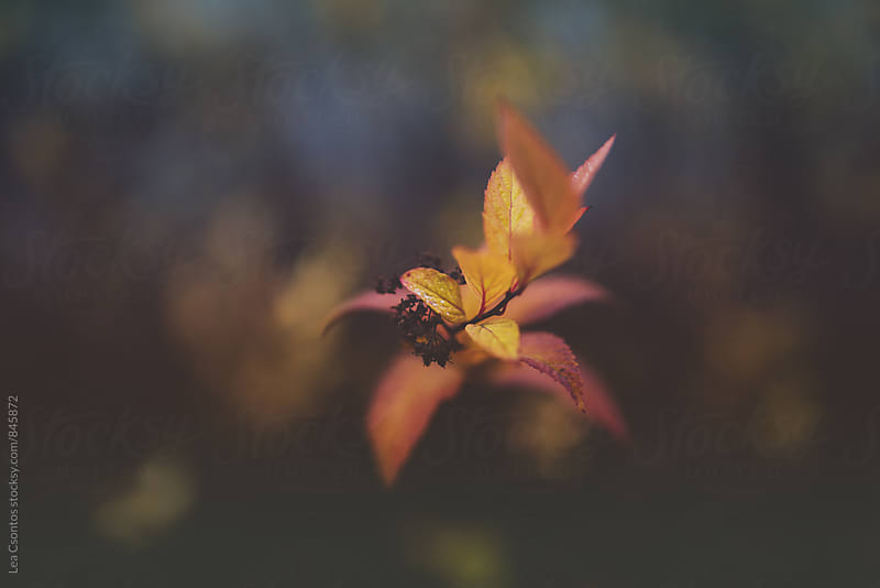 Colors of fall by Lea Csontos for Stocksy United