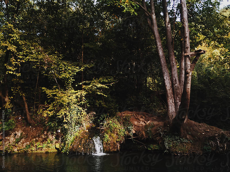 River and small waterfal in the forest in the fall by Dimitrije Tanaskovic for Stocksy United