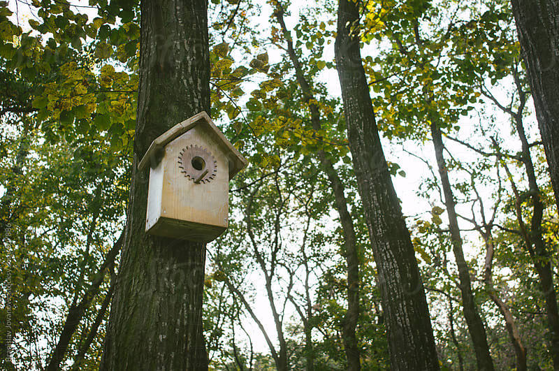 Birdhouse on a Tree by Brkati Krokodil for Stocksy United