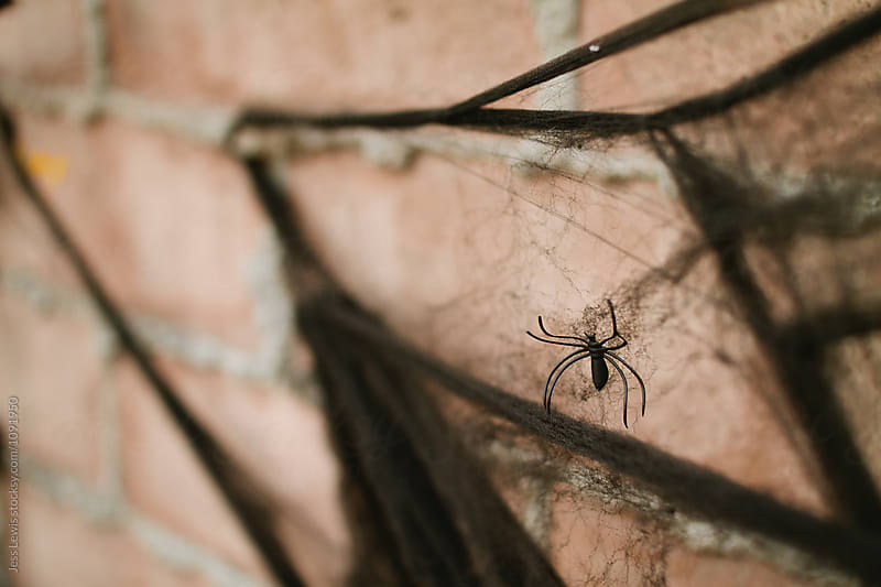 Close up of fake spider on Halloween decor by Jess Lewis for Stocksy United