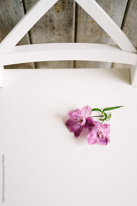 Pink flowers on a white chair. by Helen Rushbrook for Stocksy United