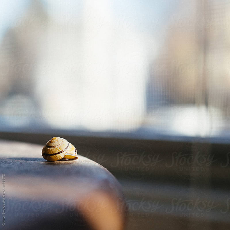 An empty snail shell sits on a wooden table by Kathryn Swayze for Stocksy United