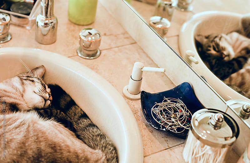 Siamese cat curled up in the bathroom sink by Carolyn Lagattuta for Stocksy United