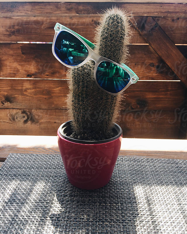 Funny Cactus wearing sunglasses  by B & J for Stocksy United