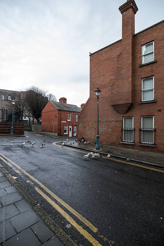 Seagulls in a street of Dublin  by Luca Pierro for Stocksy United