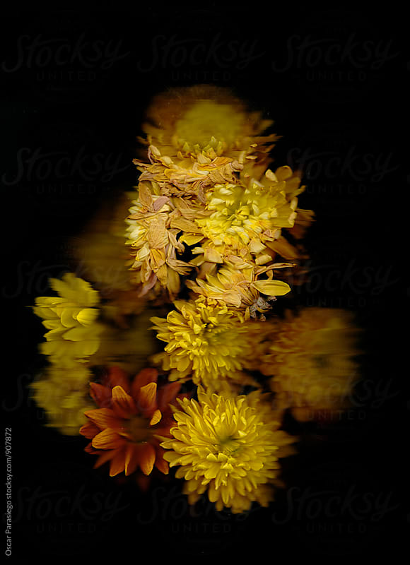 Flowers in a black background by Oscar Parasiego for Stocksy United
