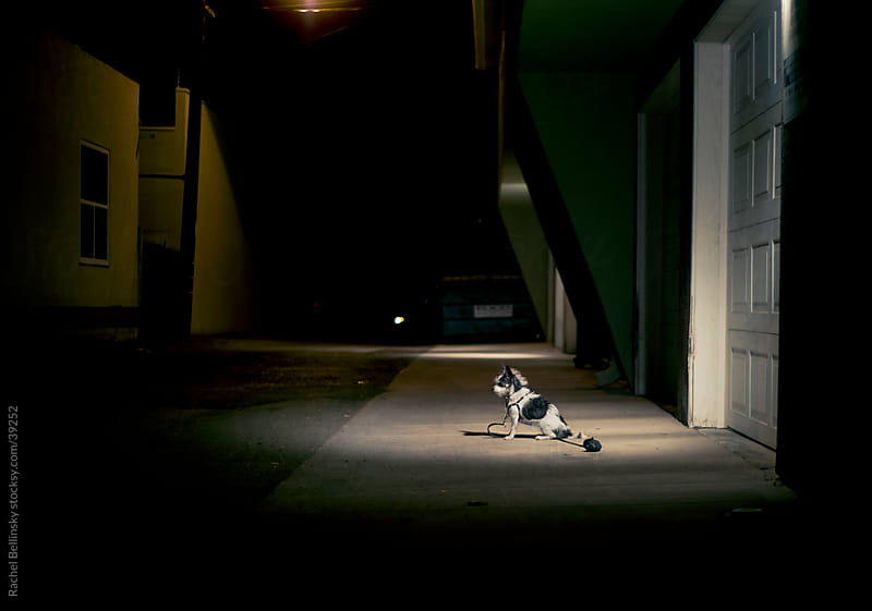 Small dog in a pool of light in a dark alley by Rachel Bellinsky for Stocksy United