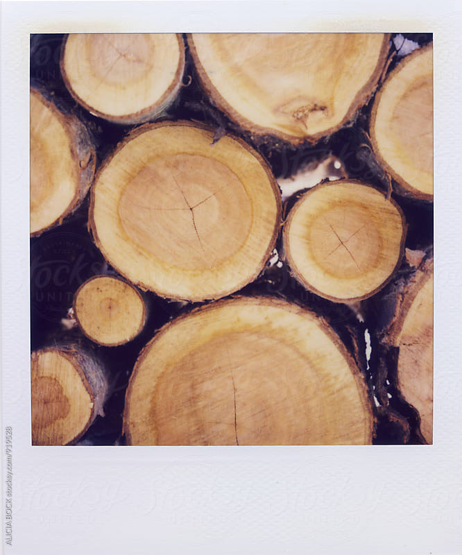 Polaroid Photograph Of Stacked Cut Wood by ALICIA BOCK for Stocksy United