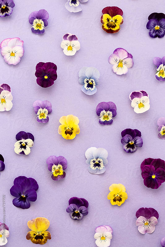 Pansy background by Ruth Black for Stocksy United