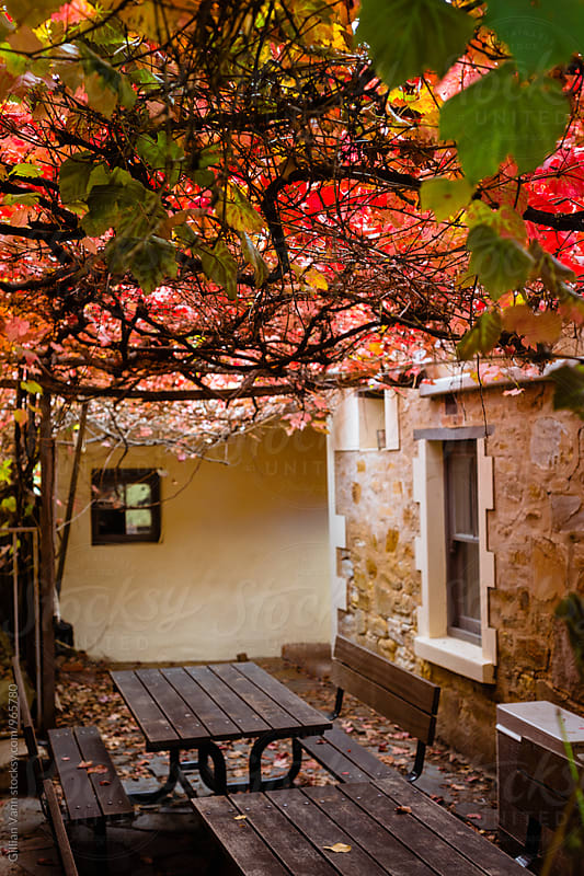 outdoor courtyard under beautiful red autumn grapevine by Gillian Vann for Stocksy United