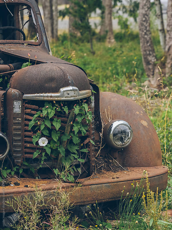 Abandon for years and old trucks rusts on a farm by unite  images for Stocksy United